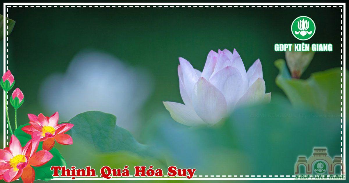Thinh Qua Hoa Suy 3